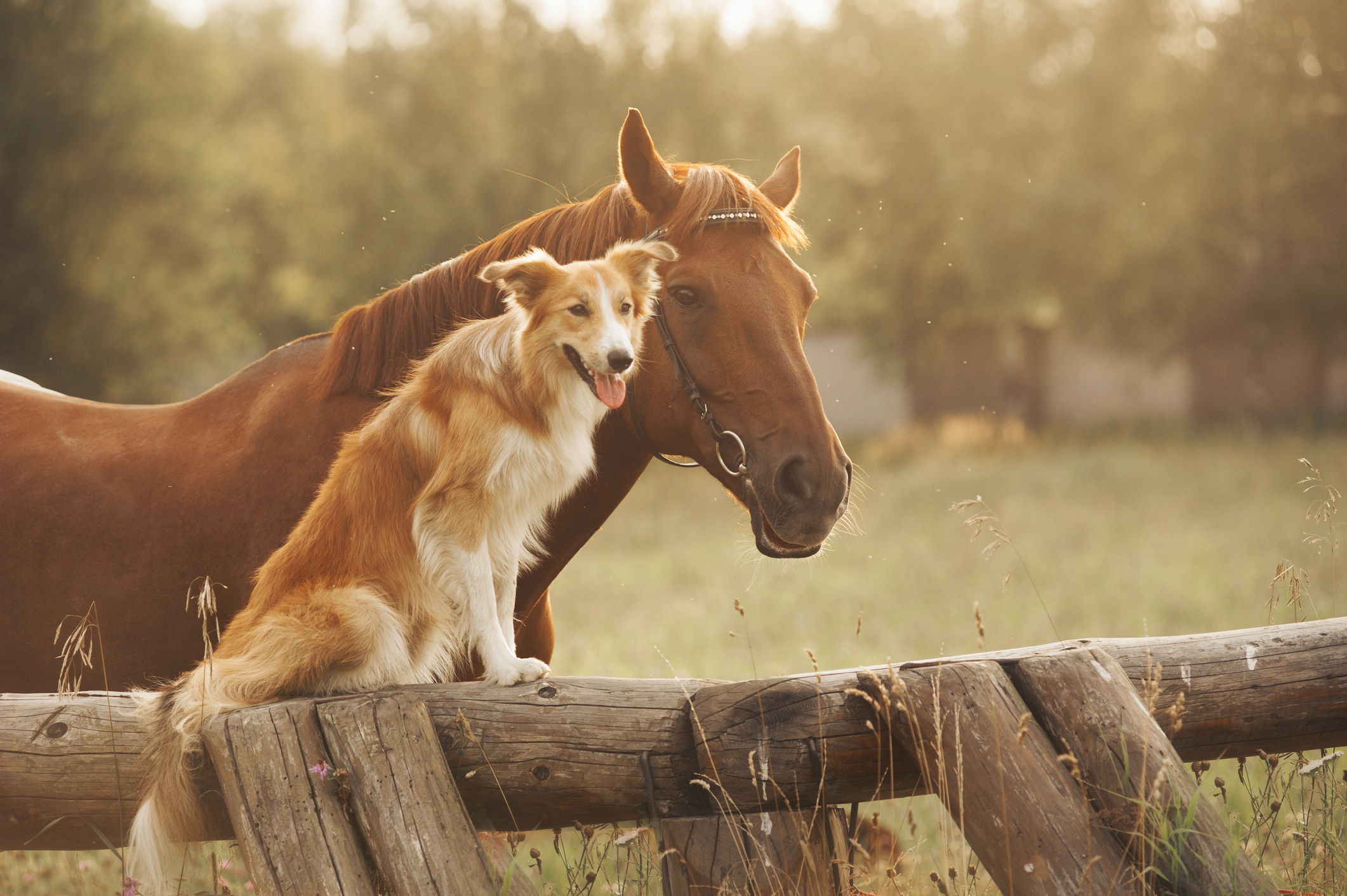 Horse and a dog relaxing near one another.