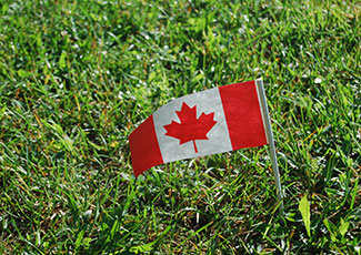 Mini Canada Flag with grassy background